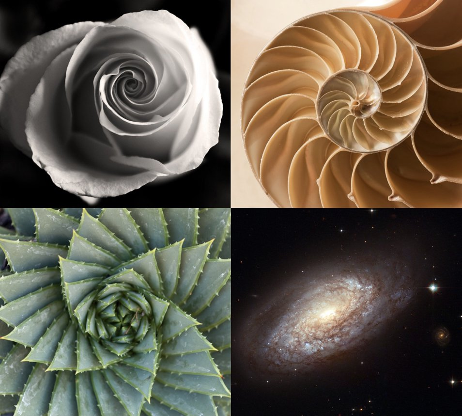 The spiral of the vital force we see everyone in nature